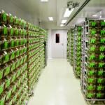Sala de Produção de camundongos - Colônia: CF1