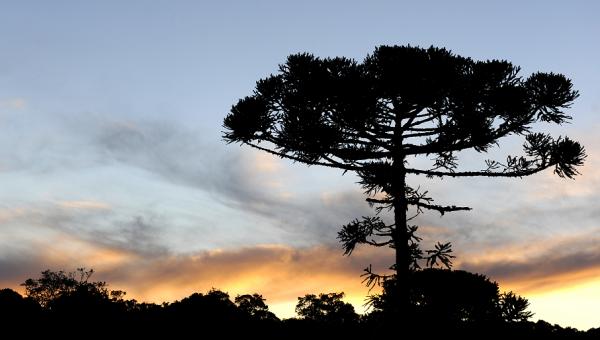 Instituto do Meio Ambiente lança expedição de fotografia no Pró-Mata