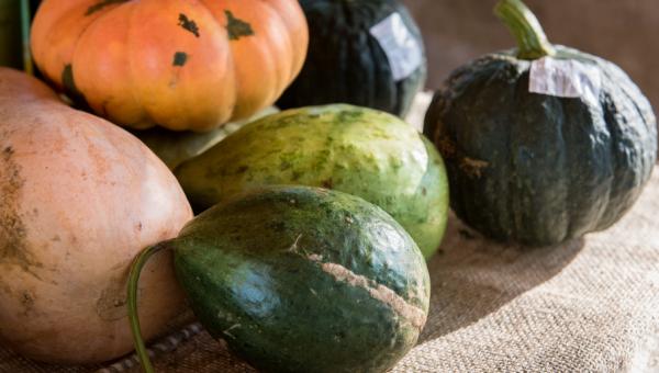 Professores preparam receita saudável na Feira Agroecológica