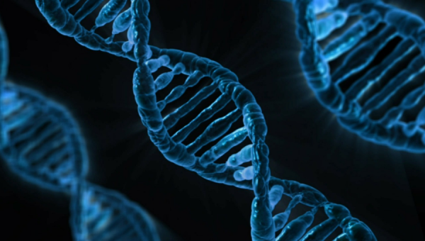 Biodireito é tema de encontro