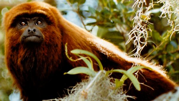 Biodiversity protection