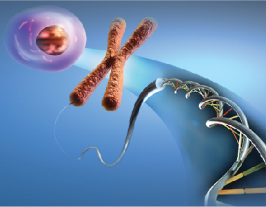 I Simpósio de Pesquisa do Programa de Pós-graduação em Biologia Celular e Molecular
