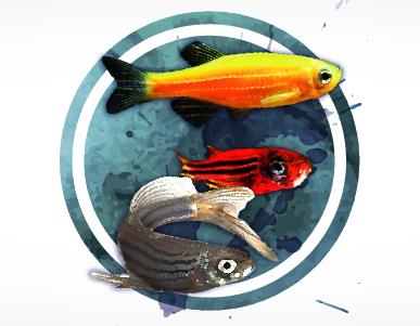 "IV Latin American Zebrafish Network (LAZEN) Symposium & III Simpósio ""O zebrafish como modelo animal de pesquisa"""