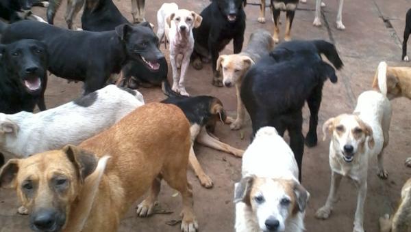 Pesquisa inédita mapeia acumuladores de animais em Porto Alegre