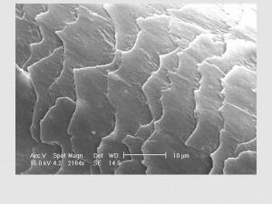 Microscopia de Varredura - Fio de cabelo humano