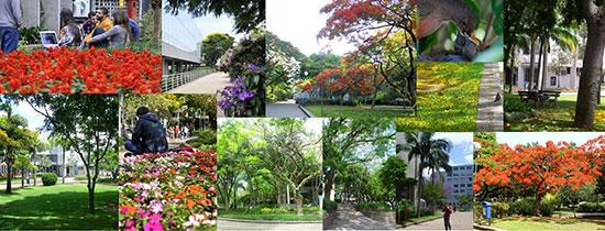 arborizacao-campus