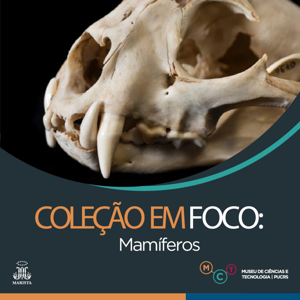 colecao-foco10