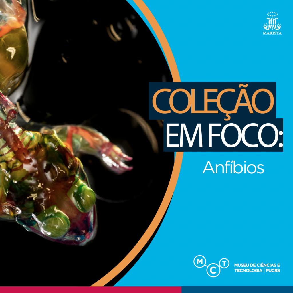 colecao-foco3