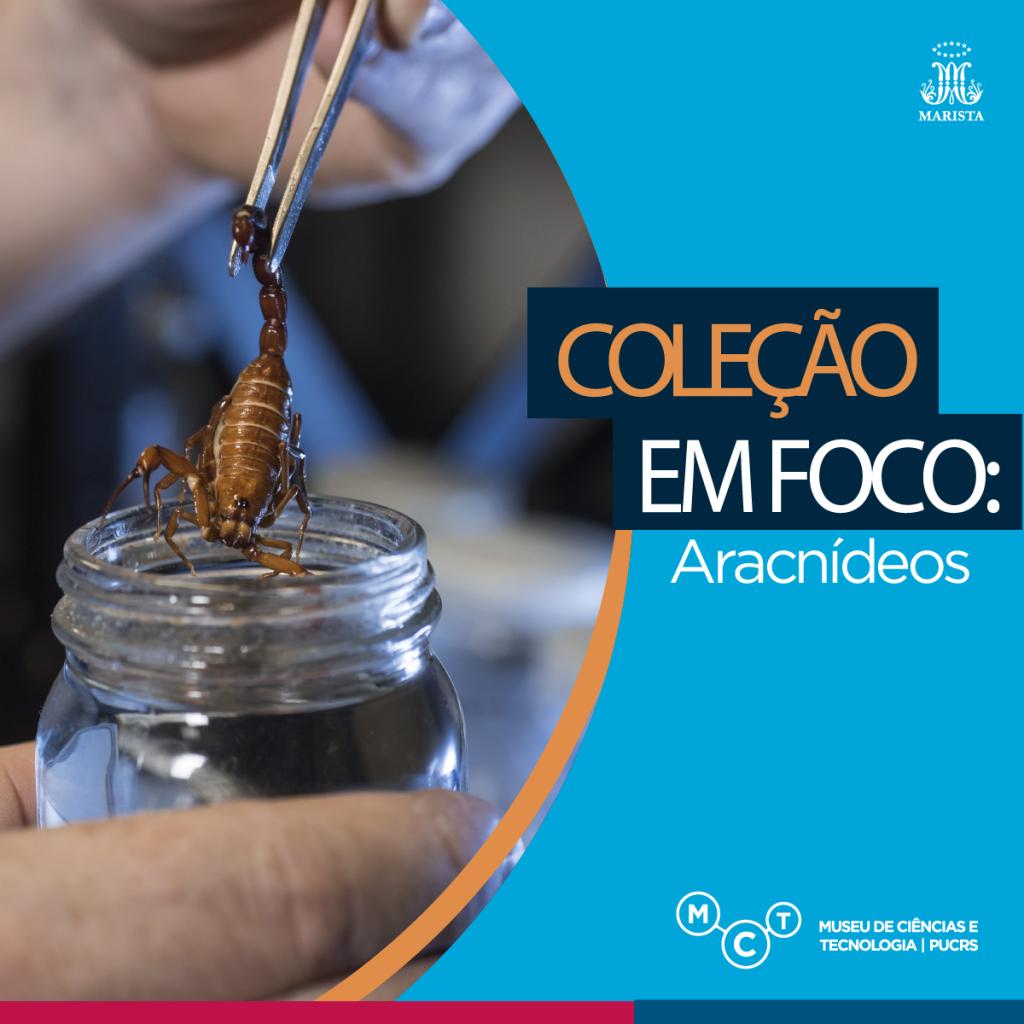 colecao-foco4