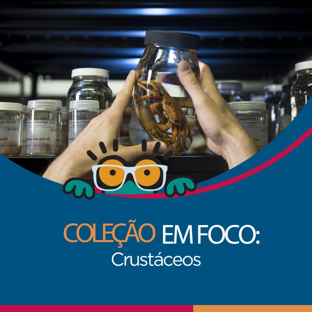 colecao-foco6