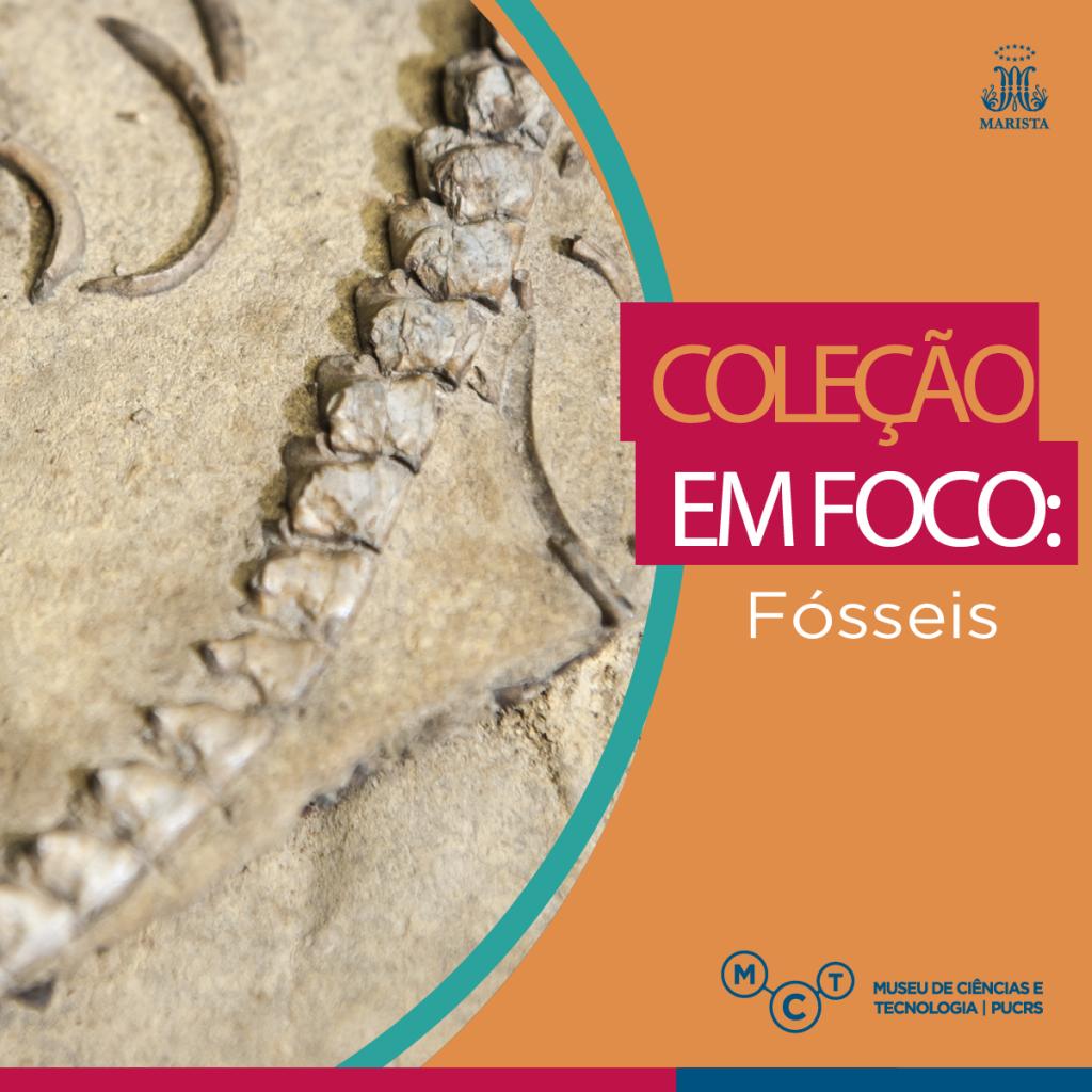 colecao-foco7
