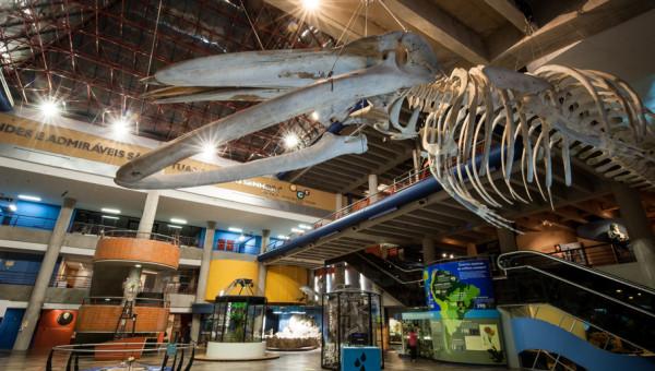 Museu de Ciência e Tecnologia da PUCRS fará tour no aplicativo TikTok