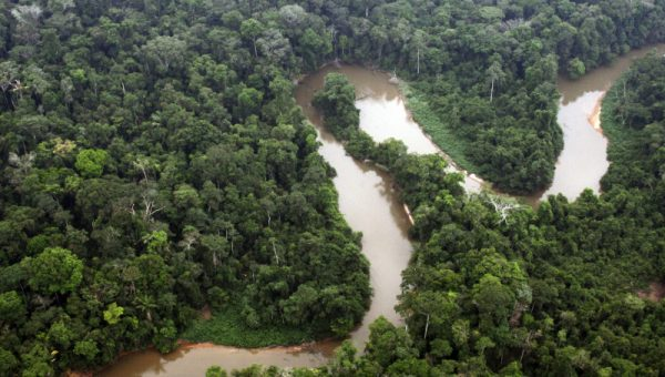Dia da Amazônia: maior floresta tropical do mundo contribui para a regulação do clima