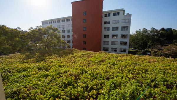 Campus Living Lab: Telhado Verde resgata flora e fauna na PUCRS