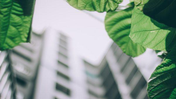 Sustentabilidade ganha cada vez mais importância no setor de edificações