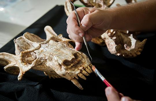 Museu de Ciências e Tecnologia, Paleontologia,coleções científicas
