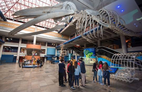 Esqueleto de baleia-de-Bryde,Bruno Todeschini,Museu de Ciências e Tecnologia