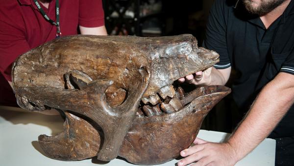Na rota do turismo paleontológico