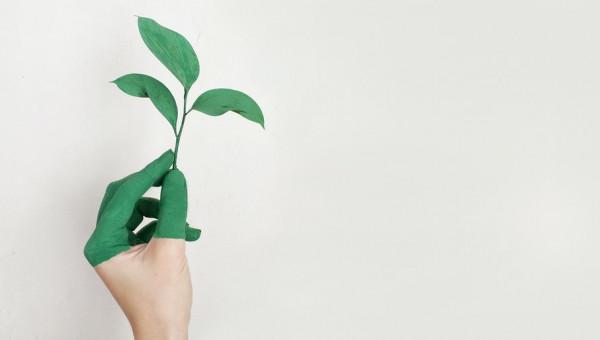 Dia da Sobrecarga da Terra alerta para a necessidade de ações sustentáveis