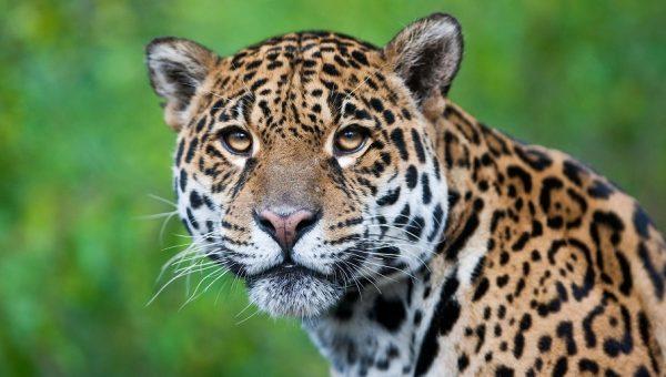 Estudar a biodiversidade é atuar na preservação da vida e do meio ambiente