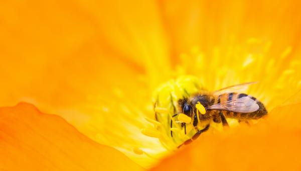 Estudo mostra o impacto de agrotóxicos no desenvolvimento das abelhas