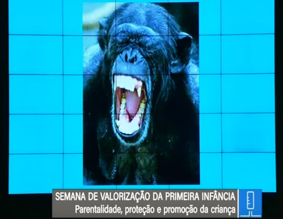 Chimpanzé Bruno, palestra Rodrigo Grassi de Oliveira