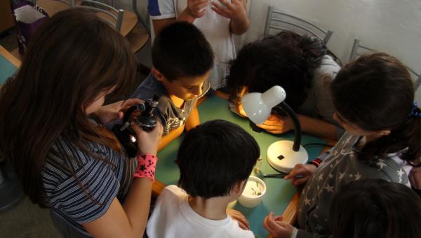 Crianças podem aprender sobre geologia e vida microscópica em cursos de curta duração
