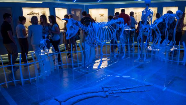 Museu da PUCRS promove diversas atividades em agosto