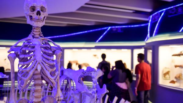 Uma Noite no Museu convida crianças a desvendarem mistérios