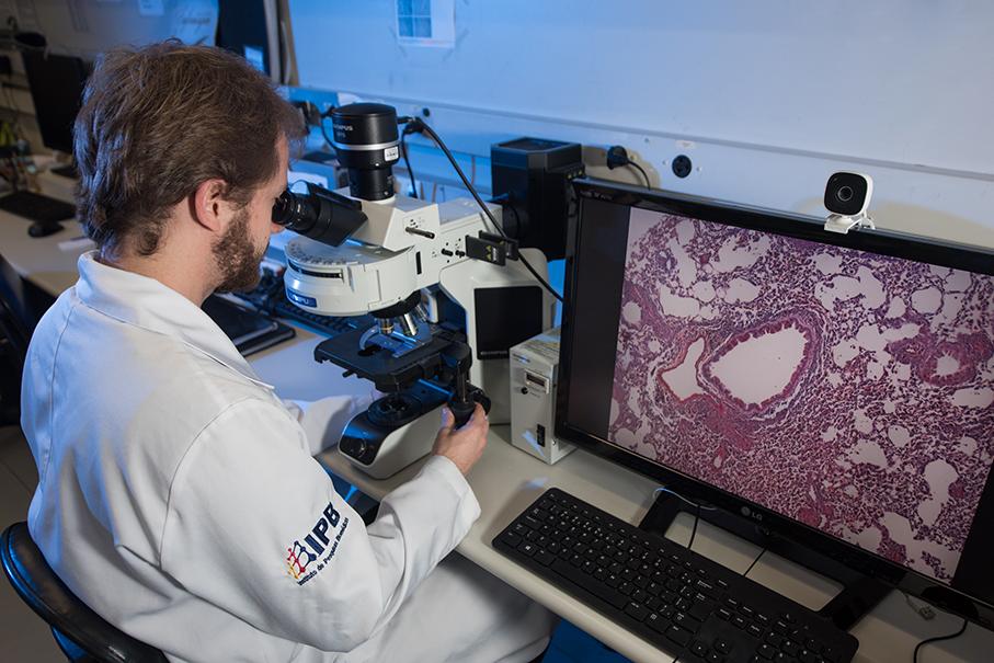 Pós pediatria, IPB, pesquisa, laboratório, microscópio