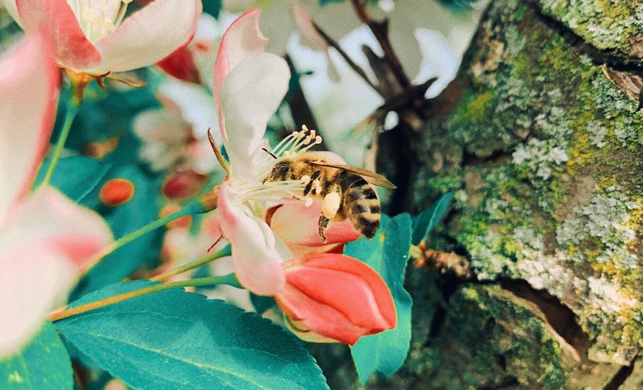 Pesquisadora da PUCRS promove a preservação dos agentes polinizadores - No Dia Mundial das Abelhas, entenda a importância da data e o impacto no meio ambiente