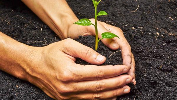 Dia Mundial do Meio Ambiente: preservar recursos é uma necessidade urgente