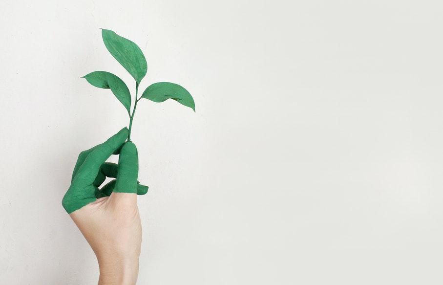 consumo consciente, consumo sustentável, 5 dicas, sustentabilidade, escola de negócios