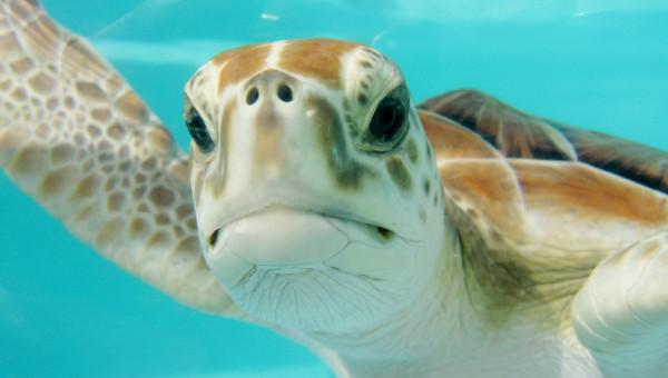 Por que é preciso mergulhar no conhecimento sobre os oceanos?