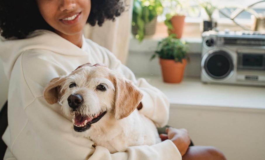 Participe do bate-papo sobre saúde mental e os animais de estimação